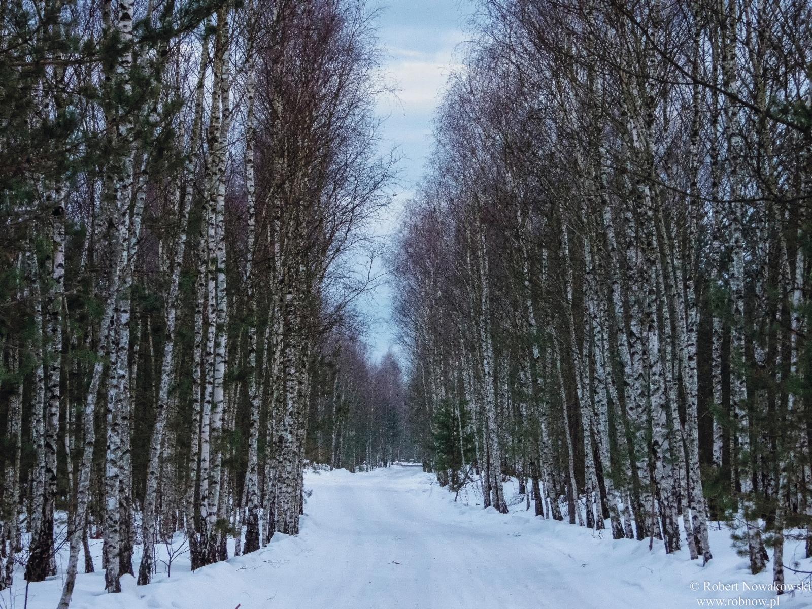 Droga przez las...