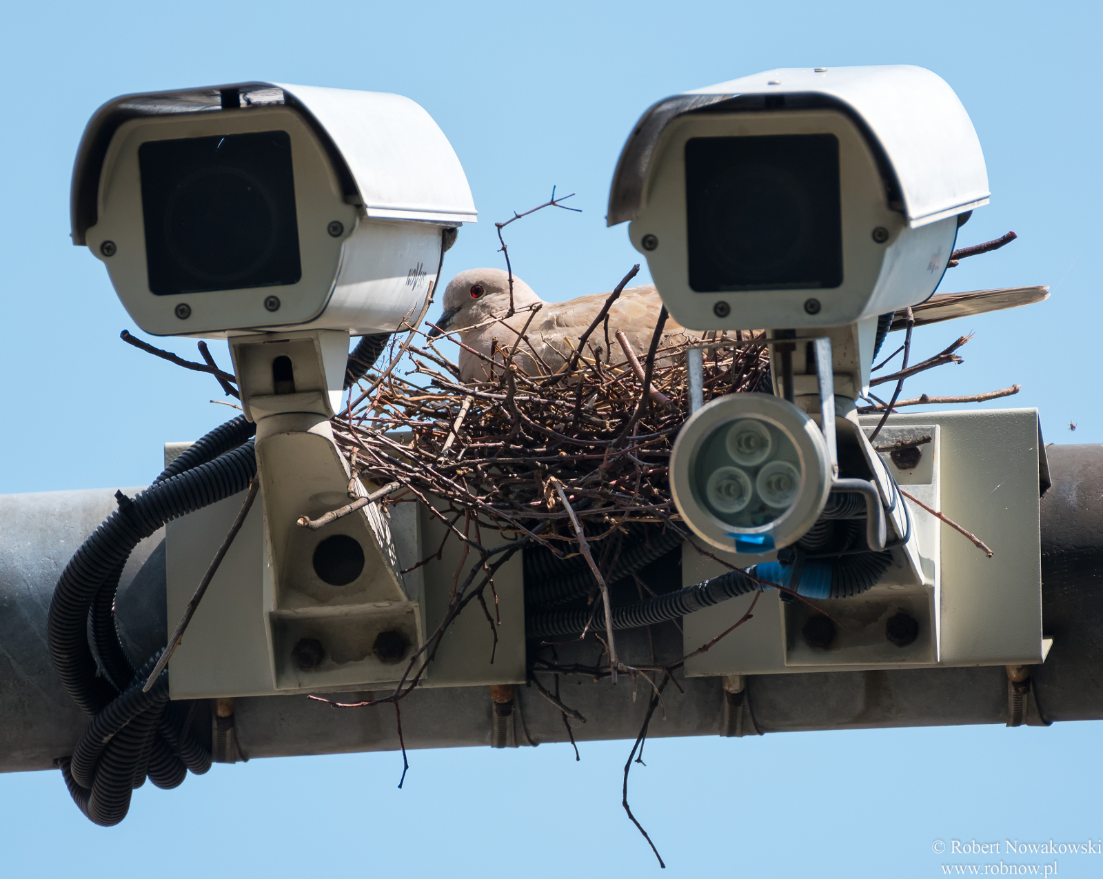 Monitoring w okolicach Jaworzna ...
