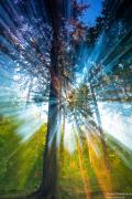 Magiczny las u nas na wsi...
