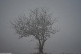 Mgła.... zima.... drzewo ....