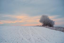Krzak i pola w Polsce zimą....