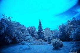 U nas na wsi w ogródku... infrared.
